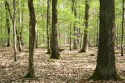 Die Waldböden emittieren klimaschädliches Lachgas. Die Ursache sind reaktive Stickstoffverbindungen aus Industrie und Landwirtschaft. (Foto: KIT)