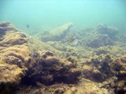 Korallenriffe vor der Küste Hainans. Algen überwuchern und Sedimente bedecken die Korallen. Foto: U. Krumme, ZMT