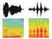 Zwei Rufe von Rhesusaffen (oben: Amplitude der Laute über die Zeit; unten: Energie für jede Frequenz über die Zeit). Illustration: Catherine Perrodin/MPI für biologische Kybernetik