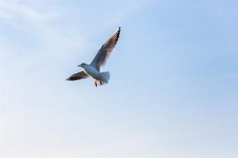 Vögel als Früh- Warnsystem für Naturkatastrophen