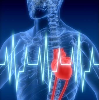 Chronische Herzschwäche: Forscher entdecken körpereigenes Schutzprotein