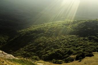 Nahezu jeder Wald in den USA von zunehmender Trockenheit bedroht