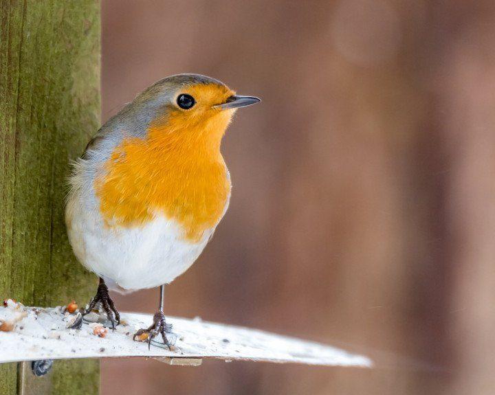 """NABU-Mitmachaktion """"Stunde der Wintervögel"""""""